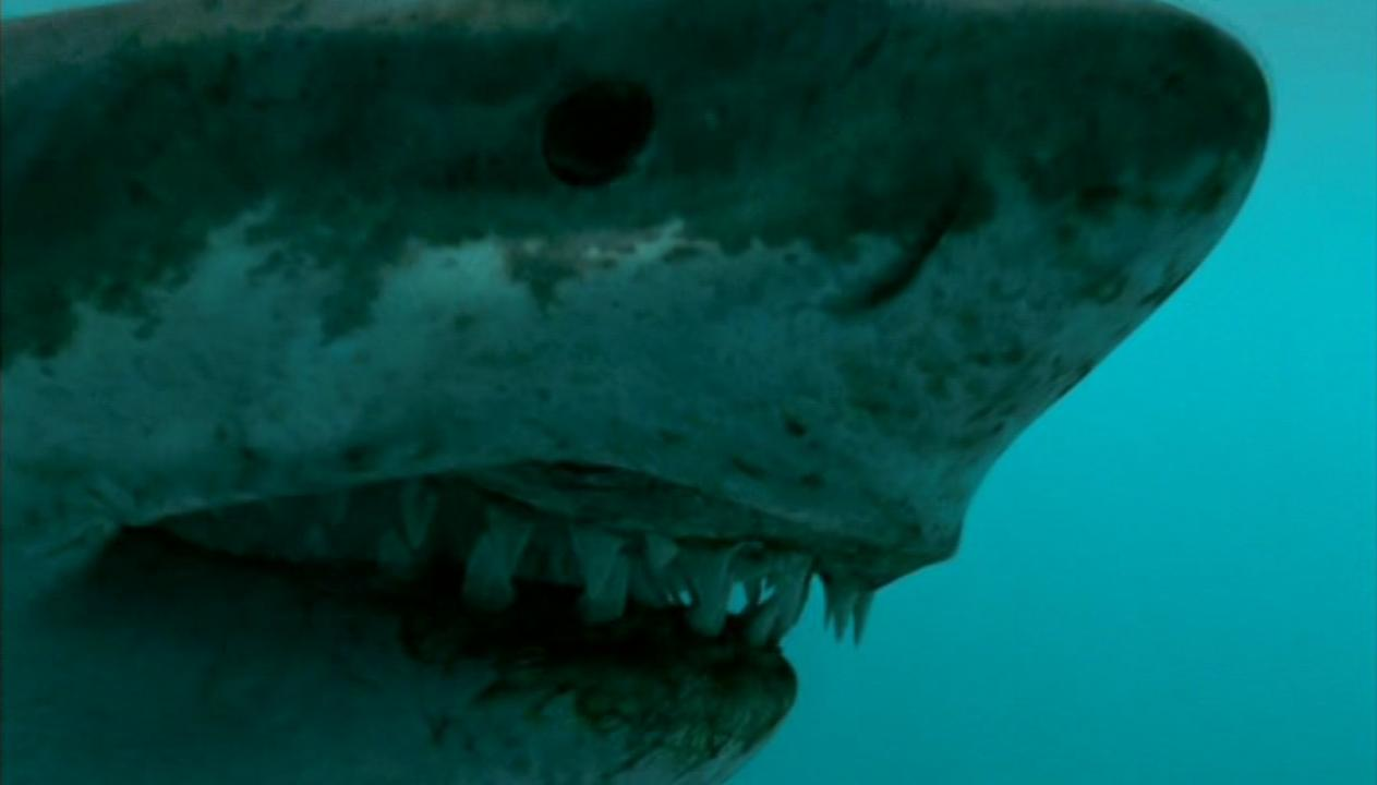 Sea Monsters Megalodon Frank's Top...